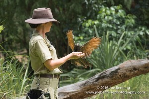 A Coocal Bird land on Trainer's Arm
