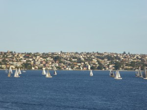 sailboats in Sydney Harbour in the evening - just one slice of the view from the harbour, which is very wide....
