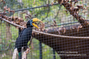 A Toucan with his beak wide open.