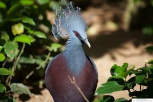 An unusual pigeon
