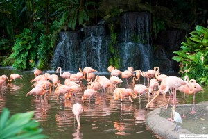 Flamingos by a waterfall
