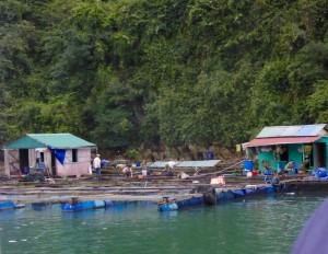 Ha Long Bay - fishing village