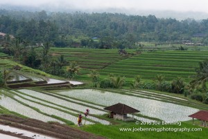 Photo of the Rice Paddies of Jatiluwih