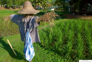 Scarecrow in Rice Paddy, Langkawi