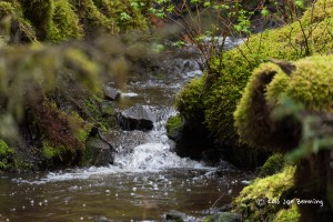 Gurgling Brook in State Park, Kodiak Alaska