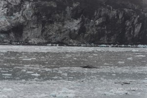 Ice in Glacier Bay