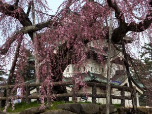 In Aomori we saw the Hirosako Castle, which housed the powerful Shogunate for many years (leader of the Samurai class); weeping cherry trees were just about to bloom near the castle. We also saw lots of wooden bridges over moats surrounding the castle - easier to burn them if invaders were approaching!