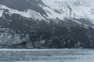 Pieces of ice in Glacier Bay