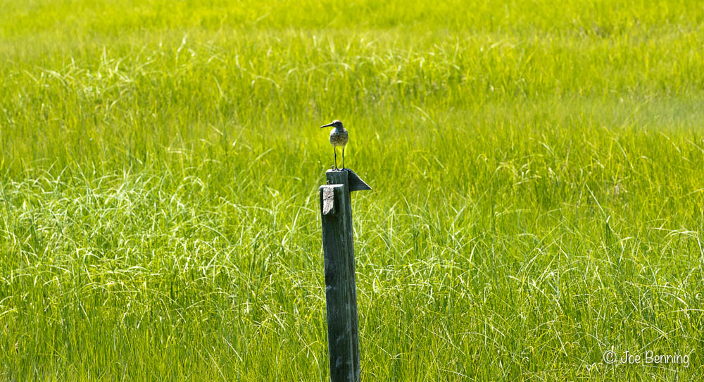 Bird-on-Post.jpg