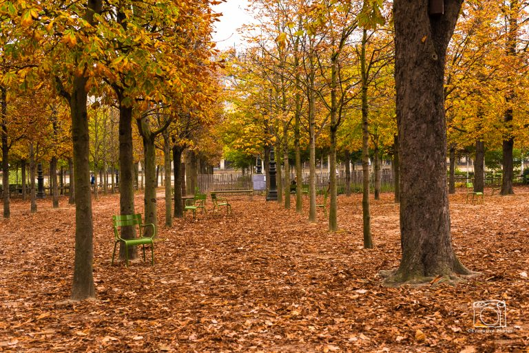 A path in the Tuileries in Paris in Autumn when the leaves turn color